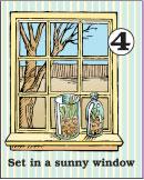 Greenhouse step 4