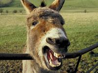 donkey-thumb.jpg
