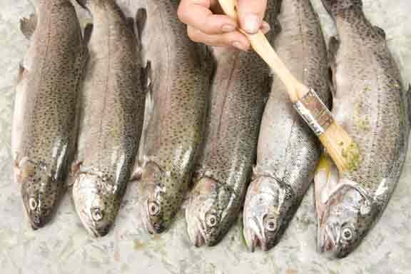 oiled-fish.jpg