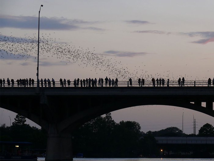 Here Are 10 of the Best Places Around the U.S. To See Bats